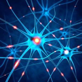 neuronale-zellen